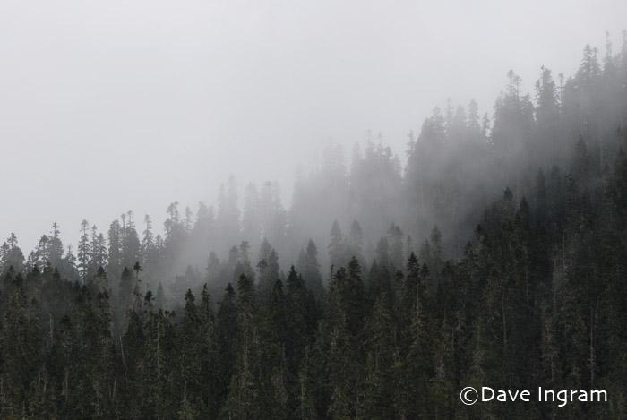 Mt. Elma, Forbidden Plateau, Strathcona Provincial Park