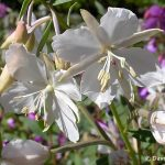 Contest Flower