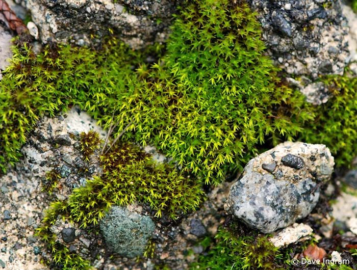 Moss on Curb