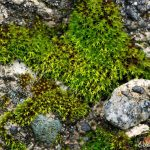 Moss on a Cement Curb
