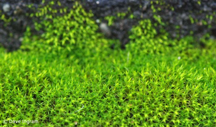 Unknown Moss #2