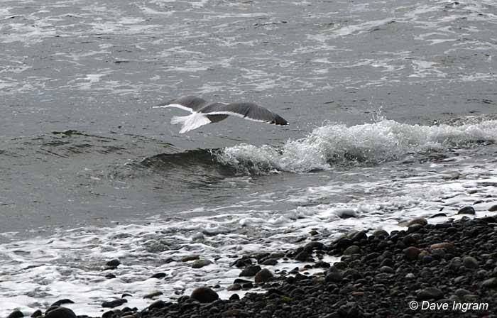 Gull Photograph #1