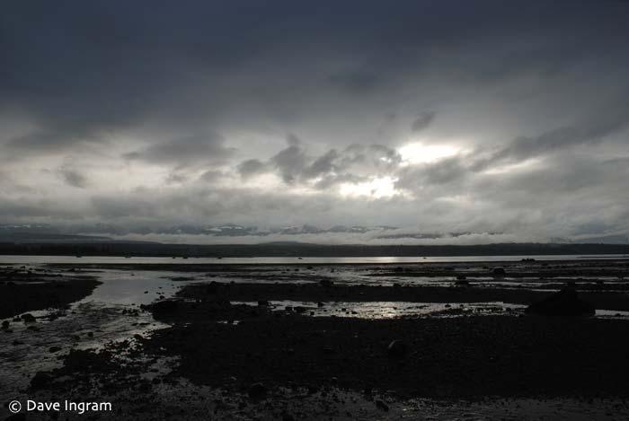 Comox Bay Mudflats #3