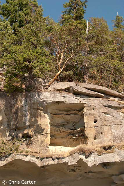 Sandstone Cliff and Arbutus