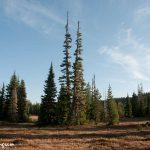 meadows-150x150