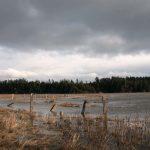 Nanaimo Estuary - Flooded Fields