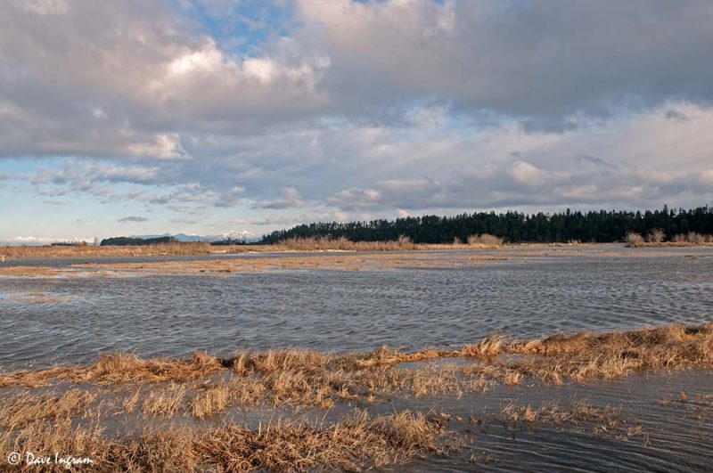 Flooded Fields - Nanaimo River Estuary