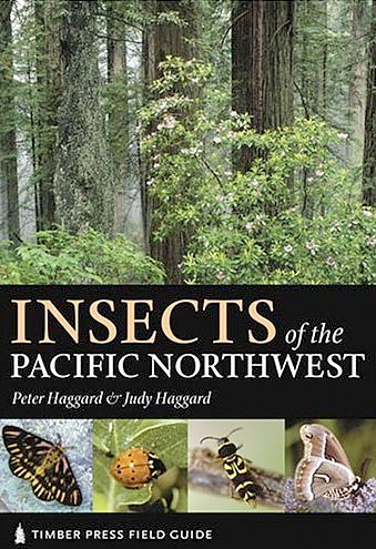 Insects of the Pacific Northwest - Peter and Judy Haggard