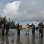 Shorebird Searchers