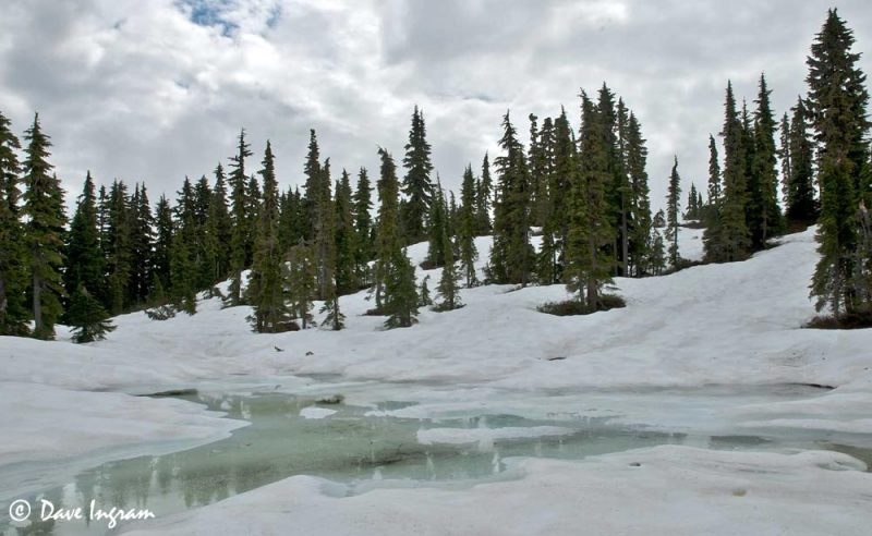 Snow Near Hairtrigger Lake