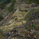 Comox Lake Bluffs Ecoreserve