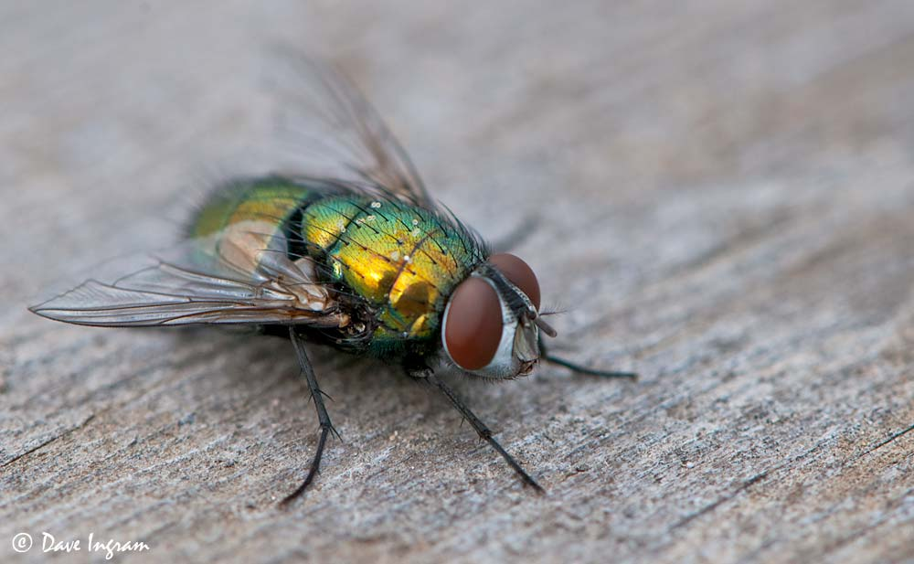 photographing backyard insects