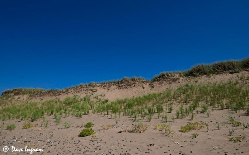 Dunes at West Mabou Beach