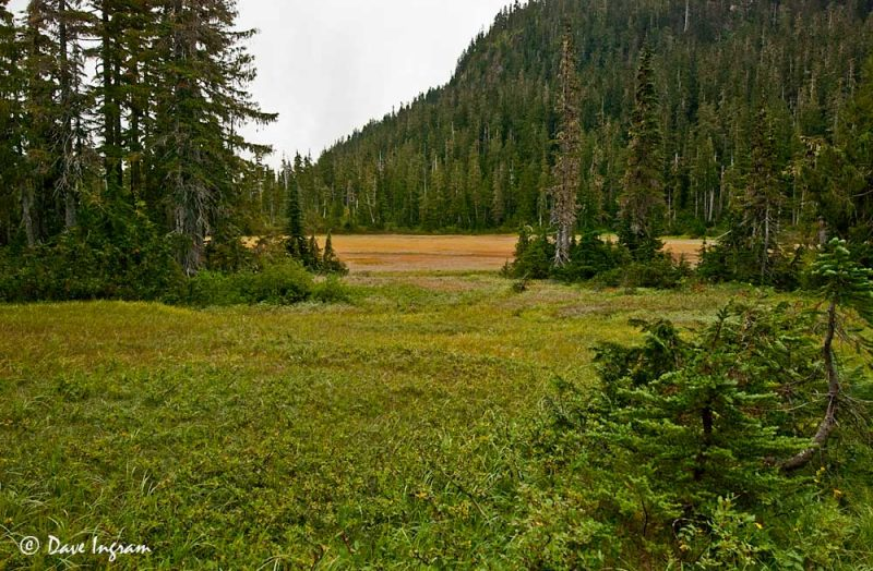 Lake Helen MacKenzie Meadows
