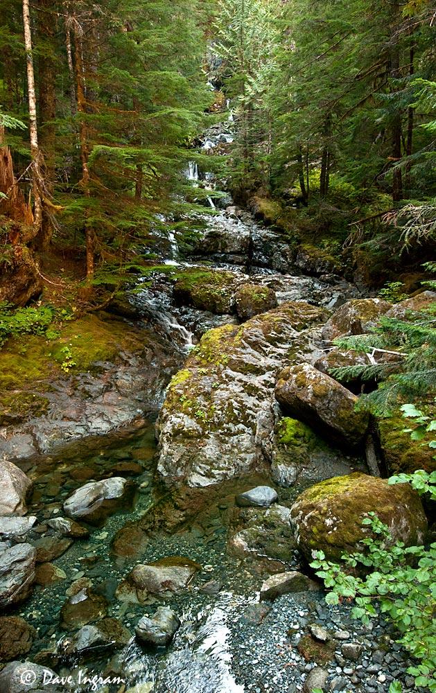 Butterwort Creek