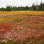 Paradise Meadows #4
