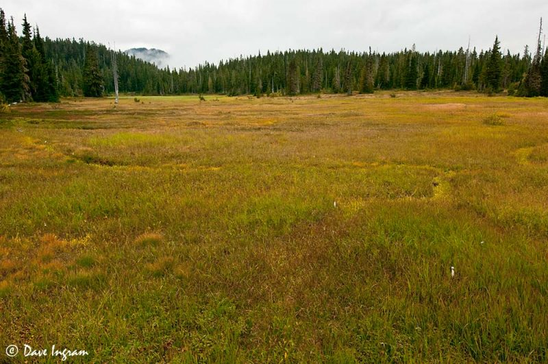 Paradise Meadows #6