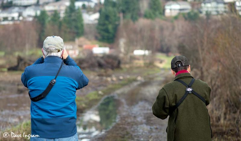 Birders Watching the Citrine Wagtail