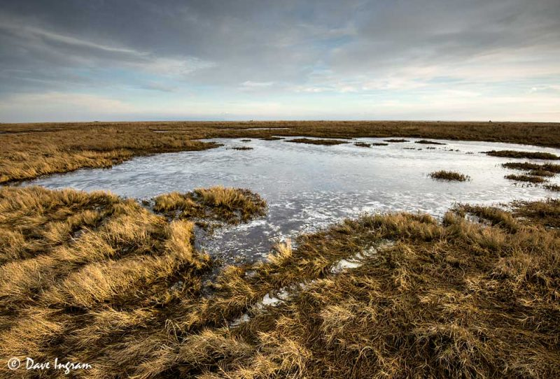 Salt Marsh Ice