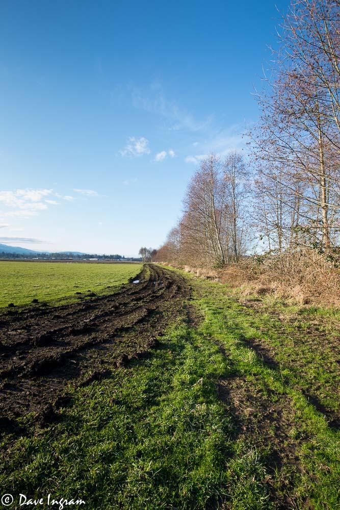Muddy Track Ruts