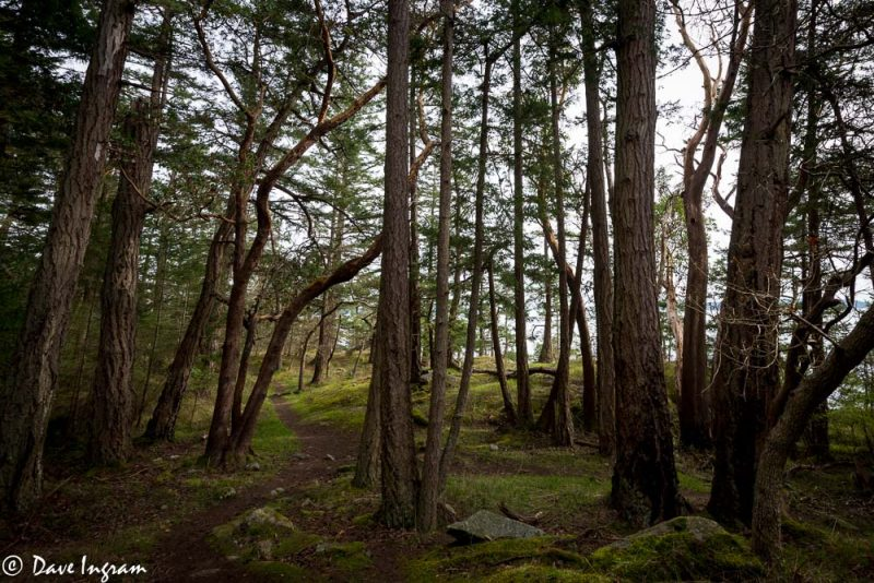 Arbutus and Douglas-fir Forest