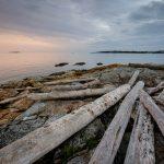 Cattle Point Drift Logs