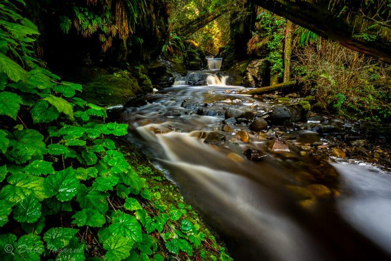 Payzant Falls