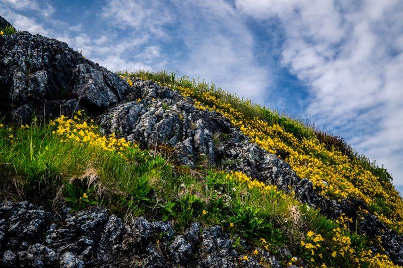Wildflowers at Schooner Cove