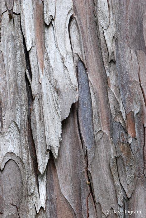 Yellow Cedar Bark Abstract