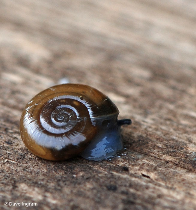 Another Small Snail