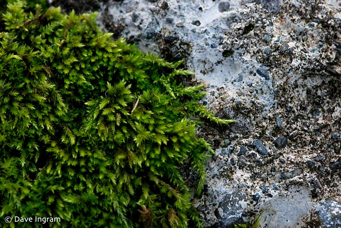 Unknown Moss #3