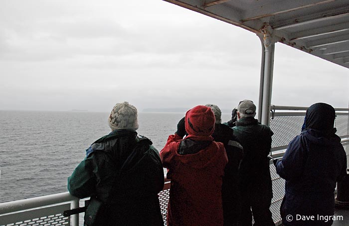 Birding on the Little River/Powell River Ferry