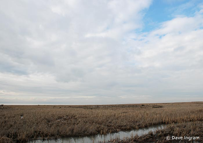 Salt Marsh at Reifel Bird Sanctuary