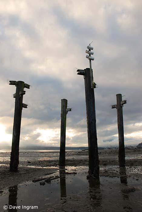 Comox Bay Mudflats #1