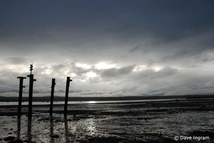 Comox Bay Mudflats #4