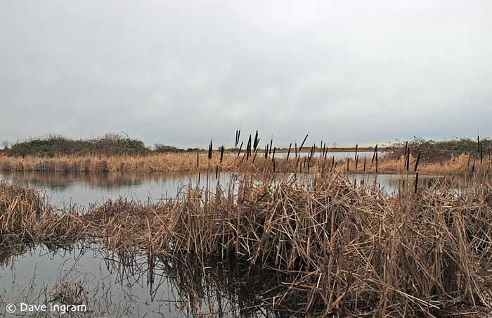 Marshes at Iona Beach Regional Park