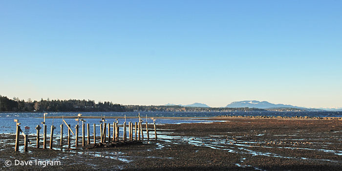Oyster Bay at Low Tide