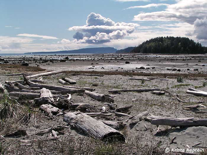 Deman and Hornby Island from Tree Island