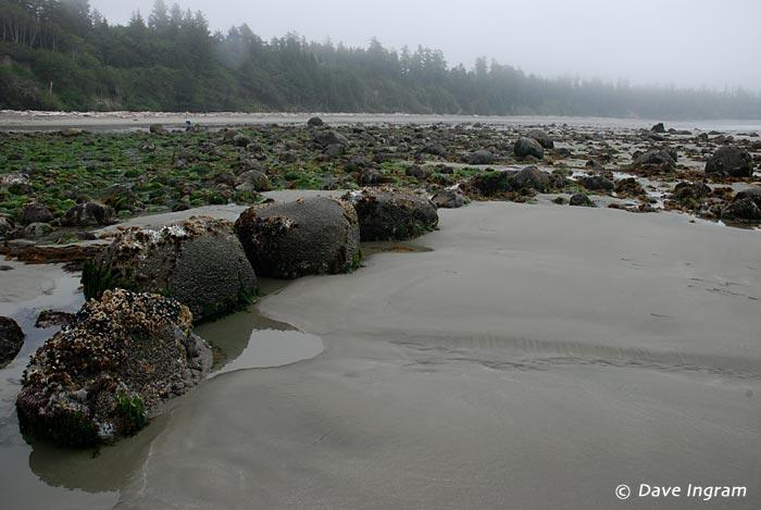 Florencia Bay, Pacific Rim National Park Reserve