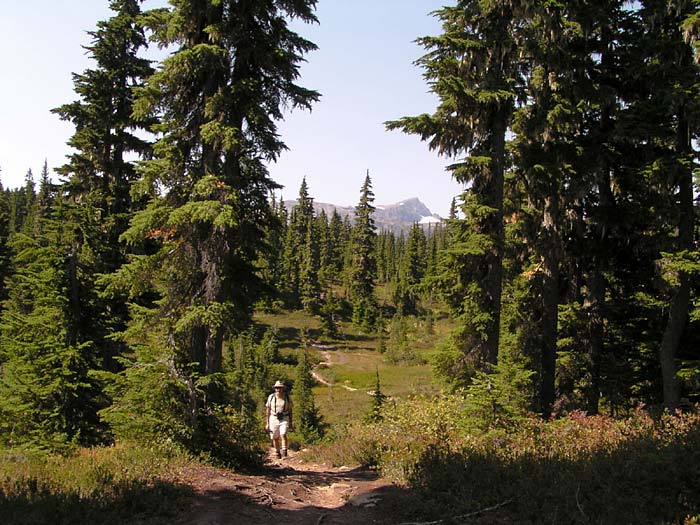 Trail to Hairtrigger Lake