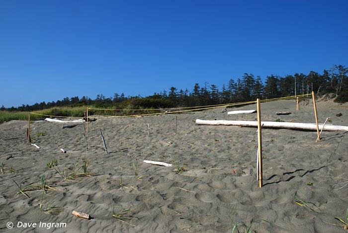 Transplantation Plot at Wickanninish Dunes