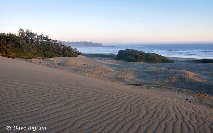 Sand Dunes at Wickaninnish Beach
