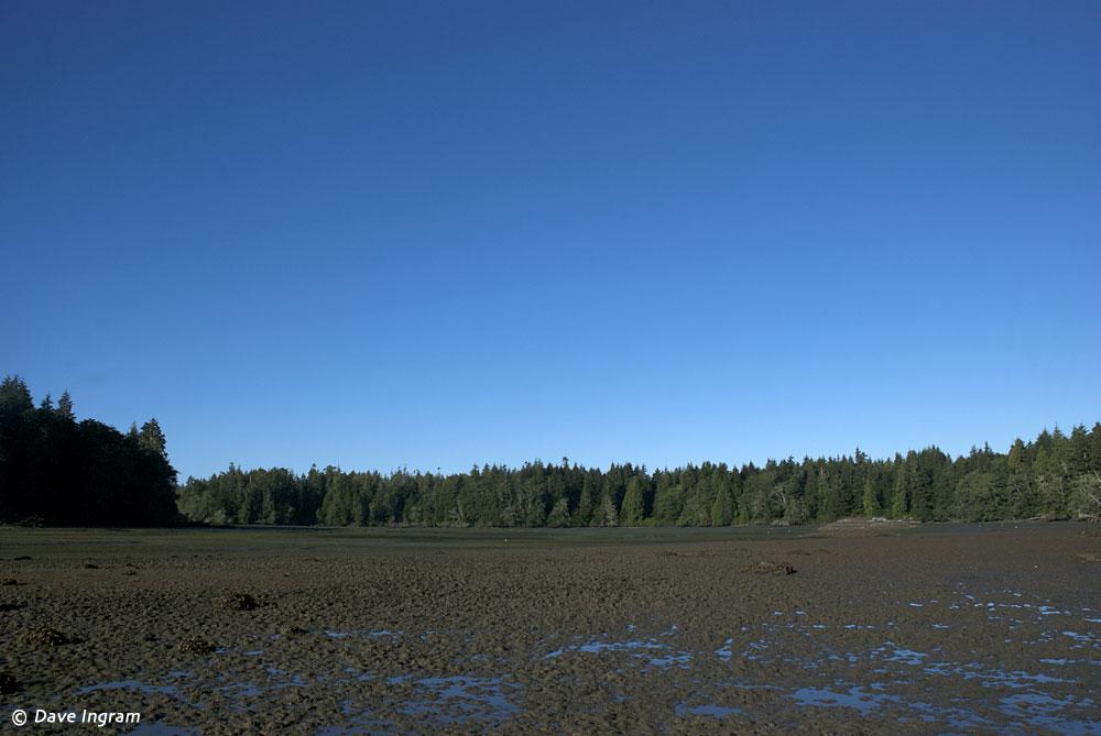 Tofino Mudflats WMA