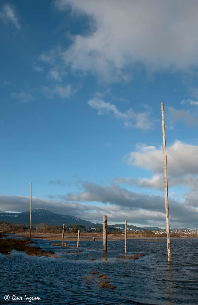 Perching Poles - Nanaimo River Estuary