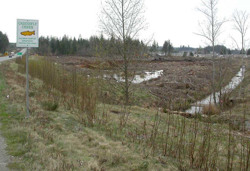 Caddisfly Creek, April 6, 2006