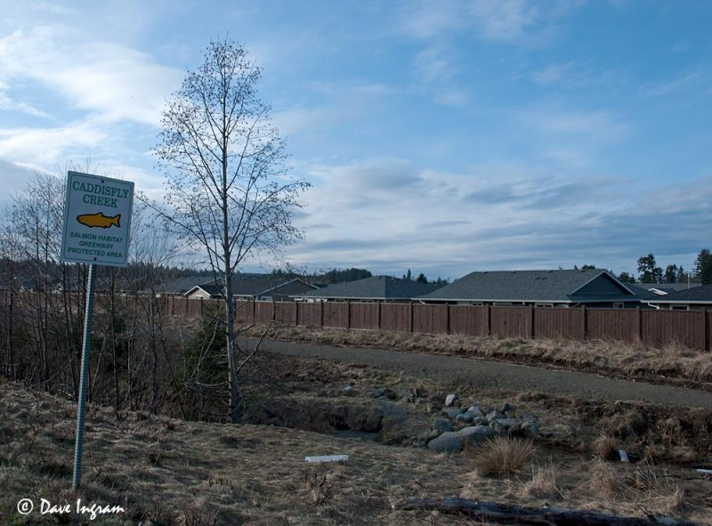 Caddisfly Creek, March 7, 2011