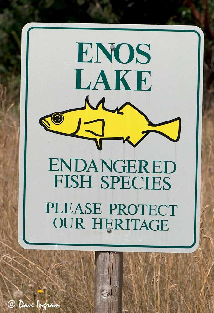Enos Lake Sign