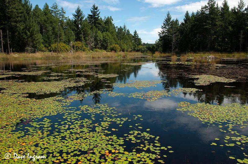Ponds Near Enos Lake