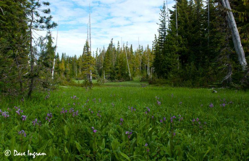 Sub-alpine Meadow