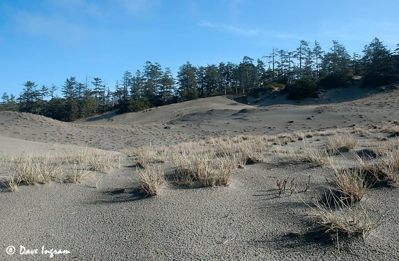 Wickaninnish Dunes #1